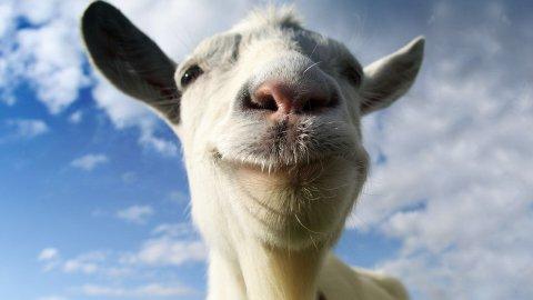 goat-teaser